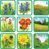 Pexetrio - Poznáš naše rastliny